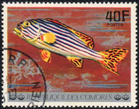 comores: COMOROS - CIRCA 1977: A stamp printed in COMOROS shows  a Gaterin orientalis, series Tropical Fishes, circa 1977