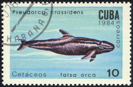 CUBA - CIRCA 1984: A Stamp printed in CUBA shows a  Pseudorca crassidens,  series Sea mammals, circa 1984 photo