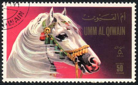 UMM AL QIWAIN - CIRCA 1971: A stamp printed in UMM AL QIWAIN  shows a white horse from series: Horses, circa 1971