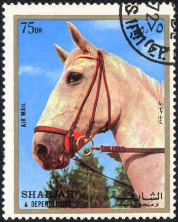 SHARJAH (UAE)  - CIRCA 1980: A stamp printed in SHARJAH (UAE) shows a white horse from series: Horses, circa 1980 photo