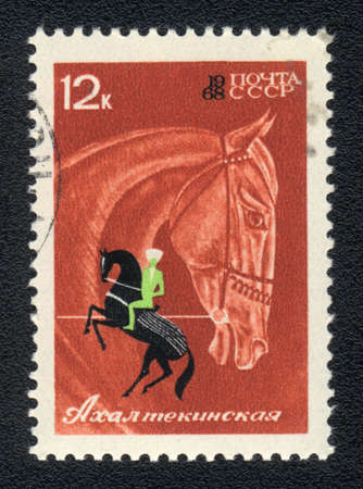 USSR - CIRCA 1968: A stamp printed in USSR shows  a  Akhal -Teke horse, series horse breed in a equestrian sport, circa 1968 photo