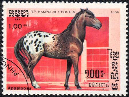 R.P. KAMPUCHEA - CIRCA 1986: A stamp printed in R.P. KAMPUCHEA  shows  a Appaloosa horse, horse breed  series , circa 1986 Stock Photo