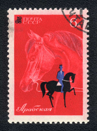 USSR - CIRCA 1968: A stamp printed in USSR shows  a  Arab horse for Dressage, series horse breed in a equestrian sport photo