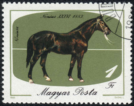 magyar: MAGYAR- CIRCA 1985: A stamp printed in MAGYAR  shows  a Black Nonius (Equus caballus) standing on a green background. Nonius XXXVI 1883, horses series Stock Photo