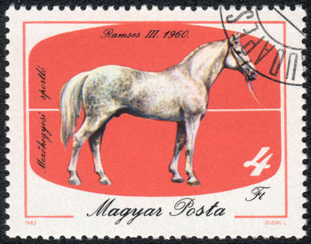 magyar: MAGYAR- CIRCA 1985: A stamp printed in MAGYAR  shows  a  Dappled Ramses (Equus caballus) standing on a red background. Ramses III 1960, horses series, circa 1985