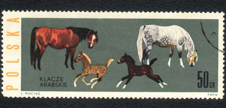 MONGOLIA - CIRCA 1957: A stamp printed in MONGOLIA  shows  a Arabian horses with foals, series, circa 1957 photo