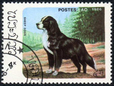 LAOS - CIRCA 1986: A stamp printed in LAOS shows  Bernese Mountain Dog, from series Breeds of dogs , circa 1986  photo
