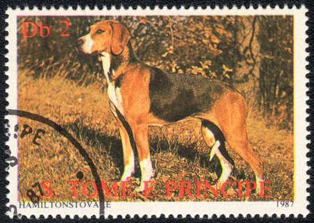 principe: SAO TOME Y PRINCIPE - CIRCA 1987: Un sello impreso en SAO TOME Y PRINCIPE perro Hamiltonstovare shows, series de Razas de perros, alrededor de 1987