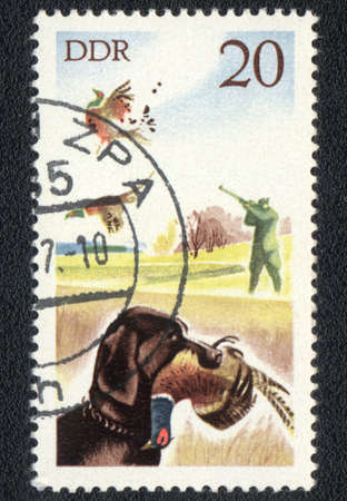 DDR - CIRCA 1970: A stamp printed in DDR  shows  a Hunting with a dog on wild game, series, circa 1970 photo