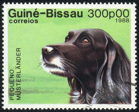 GUINEA-BISSAU - CIRCA 1988: A stamp printed in GUINEA-BISSAU  shows  Small Munsterlander, from series Breeds of dogs , circa 1988