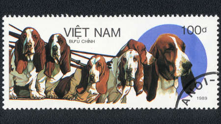 VIETNAM - CIRCA 1989: A stamp printed in VIETNAM shows  A pack of dogs of basset hound,  from series Breeds of hunting dogs, circa 1989 photo