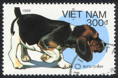 VIETNAM - CIRCA 1989: A stamp printed in VIETNAM shows  a Beagle,  from series Breeds of hunting dogs, circa 1989 Stock Photo - 13707353