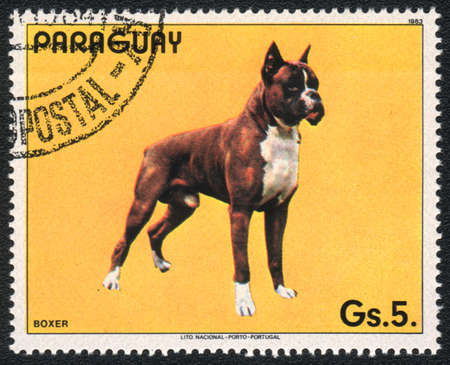PARAGUAY - CIRCA 1983: A stamp printed in PARAGUAY  shows a Boxer, from series Breed of dogs,  circa 1983 photo