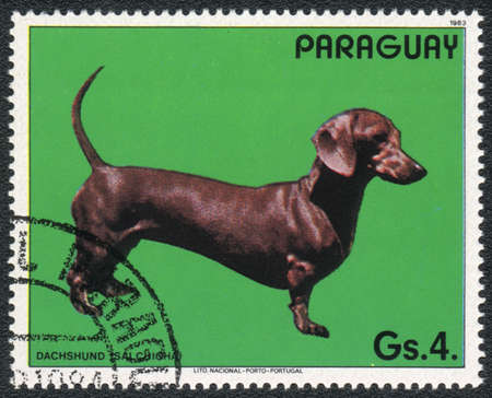 PARAGUAY - CIRCA 1983: A stamp printed in PARAGUAY  shows a  Dachshund, from series Breed of dogs,  circa 1983 Stock Photo - 13707360