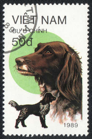 VIETNAM - CIRCA 1989: A stamp printed in VIETNAM shows  a German Shorthaired Pointer,  from series Breeds of hunting dogs, circa 1989 photo