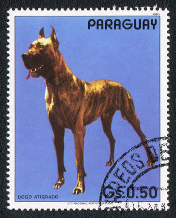 PARAGUAY - CIRCA 1983: A stamp printed in PARAGUAY  shows a  Great Dane with tiger-stripe pattern, from series Breed of dogs,  circa 1983 Stock Photo - 13707389