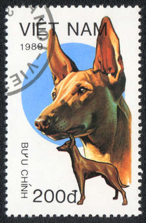 VIETNAM - CIRCA 1989: A stamp printed in VIETNAM shows  a Pharaoh Hound,  from series Breeds of hunting dogs, circa 1989 photo