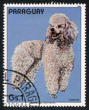 PARAGUAY - CIRCA 1983: A stamp printed in PARAGUAY  shows a  Poodle , from series Breed of dogs,  circa 1983 photo