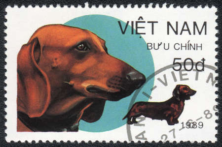 VIETNAM - CIRCA 1989: A stamp printed in VIETNAM shows  a Dachshund,  from series Breeds of hunting dogs, circa 1989 photo
