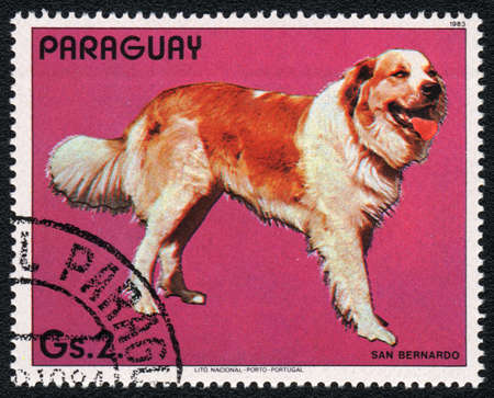 st  bernard: PARAGUAY - CIRCA 1983: A stamp printed in PARAGUAY  shows a  St. Bernard , from series Breed of dogs,  circa 1983 Stock Photo