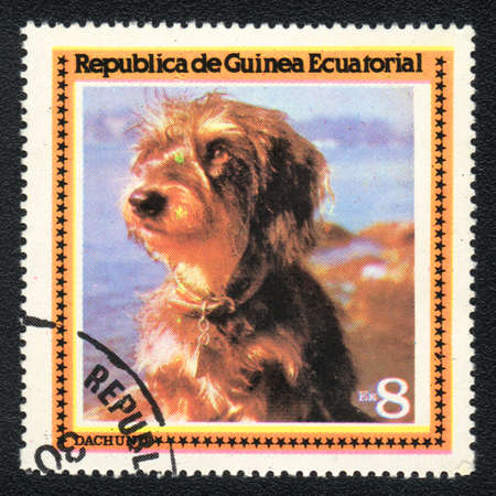 EQUATORIAL GUINEA - CIRCA 1978: A stamp printed in EQUATORIAL GUINEA shows  a Wire-haired dachshund,  from series Breeds of dogs, circa 1978 photo