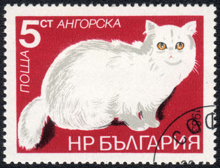 BULGARIA - CIRCA 1983: A stamp printed in BULGARIA  shows a Angora cat, from series Breeds of cats, circa 1983 photo