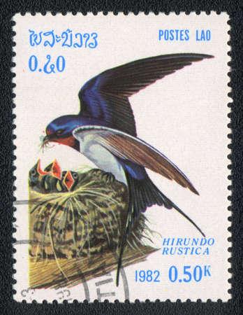 golondrina: LAOS - CIRCA 1982: Un sello impreso en LAOS muestra Golondrina com�n (Hirundo rustica), a partir de las Aves de la serie, alrededor del a�o 1982 Foto de archivo