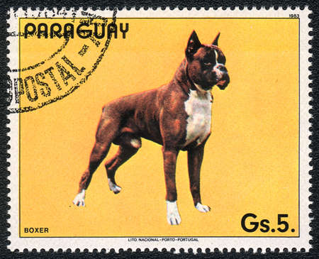 PARAGUAY - CIRCA 1983: A stamp printed in PARAGUAY shows a boxer, from series Breeds of dogs, circa 1983  photo