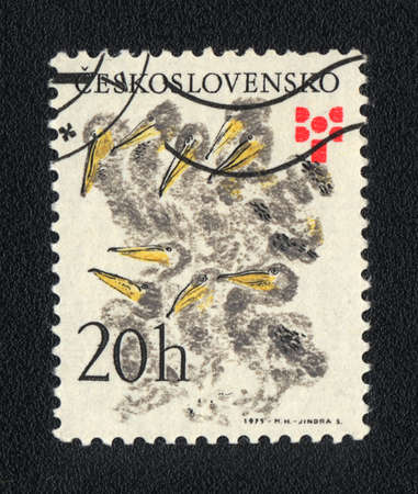 CZECHOSLOVAKIA - CIRCA 1975: A stamp printed in CZECHOSLOVAKIA shows Chicks, circa 1975 Stock Photo - 13741814