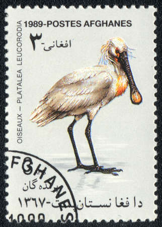 AFGHANISTAN - CIRCA 1989: A stamp printed in AFGHANISTAN  shows a Eurasian Spoonbill (Platalea Leucorodia), from series Oiseaux, circa 1989 photo