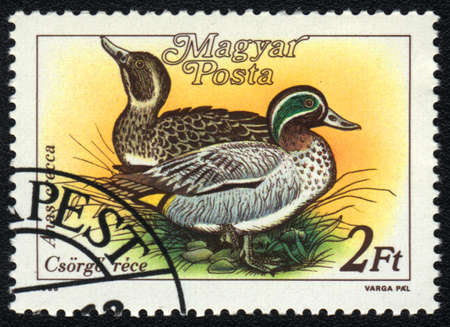 HUNGARY - CIRCA 1988: A stamp printed in HUNGARY  shows a Eurasian Teal (Anas crecca), from series Ducks, circa 1988 photo