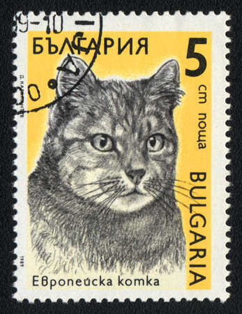 BULGARIA - CIRCA 1989: A stamp printed in BULGARIA  shows a  European cat, from series Breeds of cats, circa 1989 photo