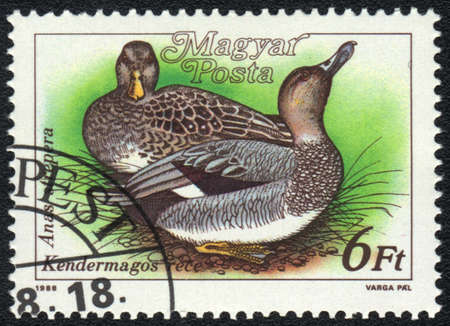 HUNGARY - CIRCA 1988: A stamp printed in HUNGARY  shows a Gadwall (Anas strepera), from series Ducks, circa 1988 photo