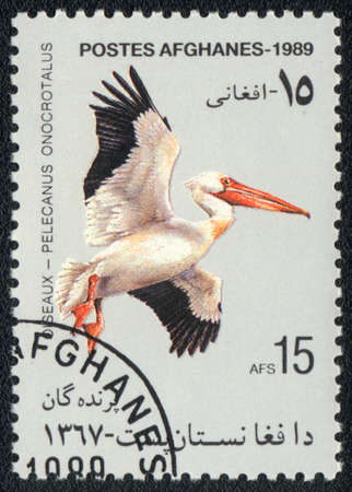 AFGHANISTAN - CIRCA 1989: A stamp printed in AFGHANISTAN  shows a Great White Pelican (Pelecanus onocrotalus), from series Birds, circa 1989 photo
