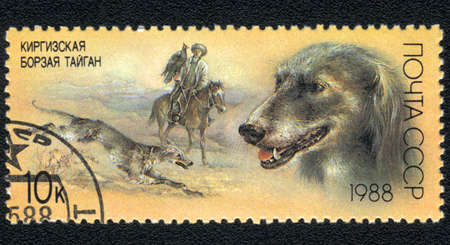 USSR - CIRCA 1988: A stamp printed in USSR  shows a   Kirghiz hound Taigan, from series Breeds of hound, circa 1988 Stock Photo - 13741164