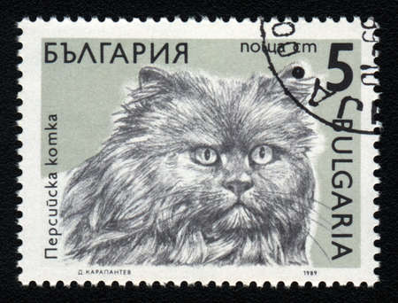 BULGARIA - CIRCA 1989: A stamp printed in BULGARIA  shows a Persian cat, from series Breeds of cats, circa 1989 photo