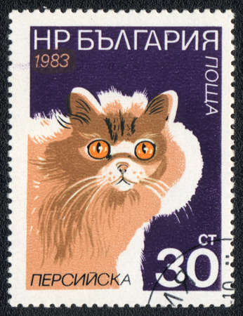 BULGARIA - CIRCA 1983: A stamp printed in BULGARIA  shows a Persian cat, from series Breeds of cats, circa 1983 photo