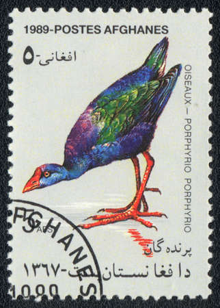 AFGHANISTAN - CIRCA 1989: A stamp printed in AFGHANISTAN  shows a Porphyrio porphyrio, from series Oiseaux, circa 1989 photo