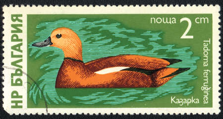 perforated stamp: BULGARIA - CIRCA 1980: A stamp printed in BULGARIA shows Ruddy Shelduck (Tadorna ferruginea), from series Waterfowl, circa 1980