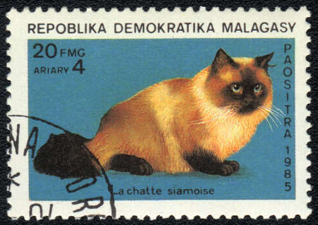 MALAGASY - CIRCA 1985: A stamp printed in MALAGASY  shows a Siamese cat, from series Breeds of cats, circa 1985 photo
