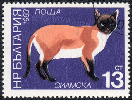 BULGARIA - CIRCA 1983: A stamp printed in BULGARIA  shows a  Siamese cat, from series Breeds of cats, circa 1983 photo