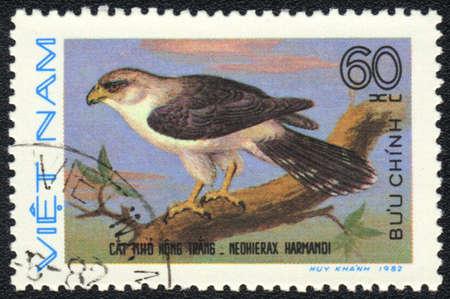 VIETNAM - CIRCA 1982: A stamp printed in VIETNAM shows Neohierax harmandi, from series bird of prey, circa 1982 photo