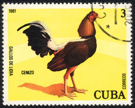 CUBA - CIRCA 1981: A stamp printed in CUBA  shows Game-cock Cenizo, from series Fighting cocks, circa 1981 Stock Photo - 13775851