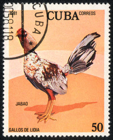 CUBA - CIRCA 1981: A stamp printed in CUBA  shows Game-cock Jabao, from series Fighting cocks, circa 1981
