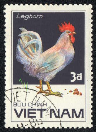 leghorn: VIETNAM - CIRCA 1985: A stamp printed in VIETNAM  shows  White Leghorn (chicken), from series Chicken Breeds, circa 1985 Editorial