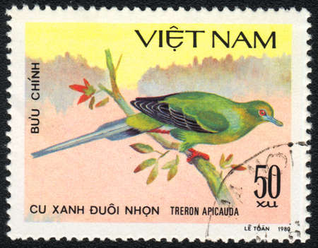 VIETNAM - CIRCA 1980: A stamp printed in VIETNAM  shows Pin-tailed Green Pigeon (Treron apicauda), from series Tropical Pigeon, circa 1980 Stock Photo - 13775854