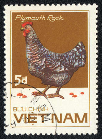 VIETNAM - CIRCA 1985: A stamp printed in VIETNAM  shows Plymouth Rock hen, from series Chicken Breeds, circa 1985
