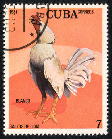 CUBA - CIRCA 1981: A stamp printed in CUBA  shows White game-cock Blanco, from series Fighting cocks, circa 1981 Stock Photo - 13775865