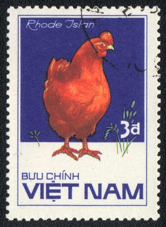 red hen: VIETNAM - CIRCA 1985: A stamp printed in VIETNAM  shows  Rhode Island Red hen, from series Chicken Breeds, circa 1985