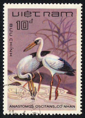 VIETNAM - CIRCA 1980  A stamp printed in VIETNAM  shows Asian Openbill  Anastomus oscitans , from series , circa 1980 photo